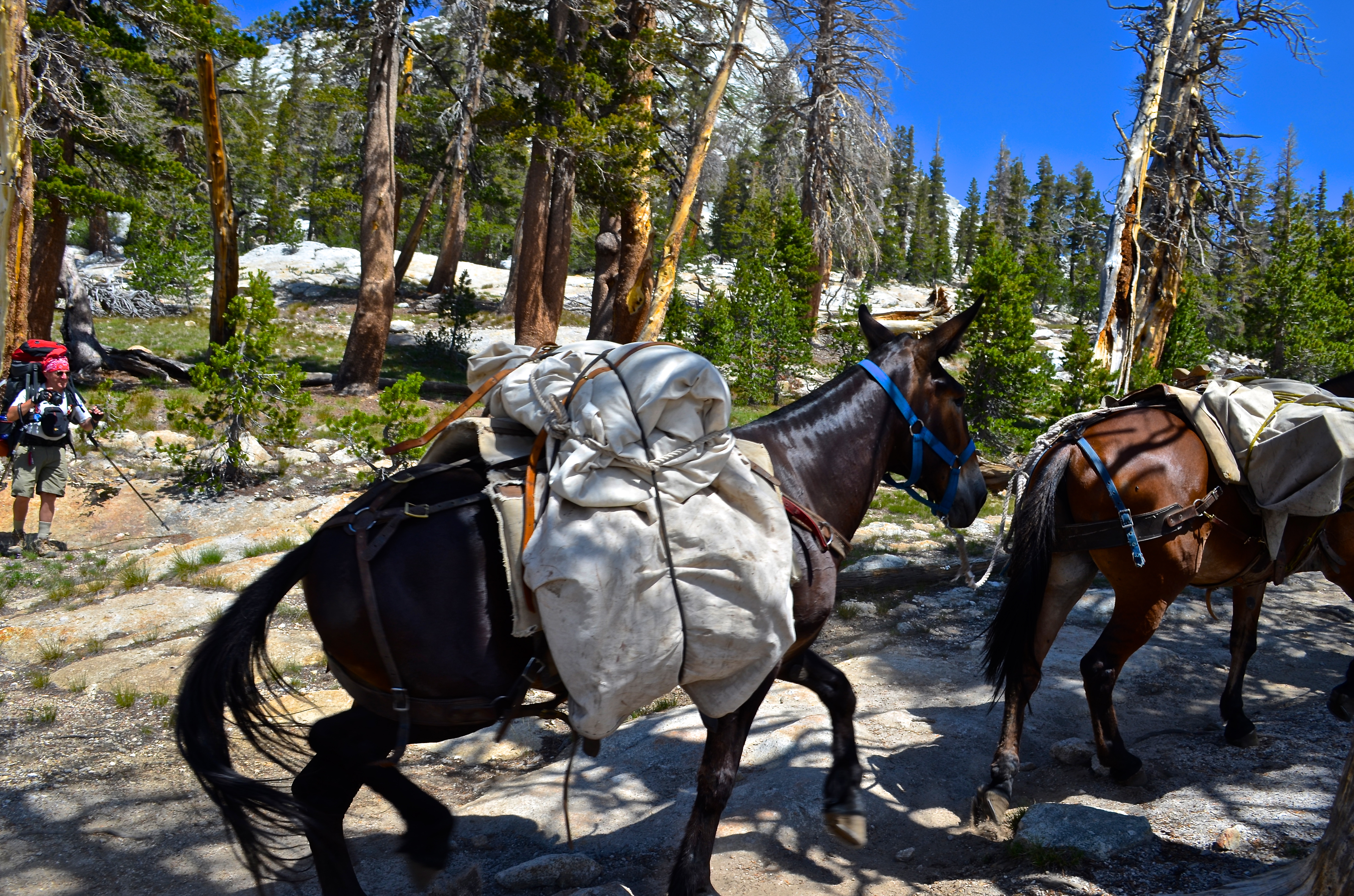Pack train | the late bloomer hiker